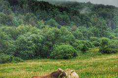 grab-krowy-scaled