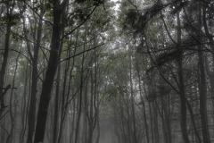 jaworzyna-koniecznianska-mgla-scaled