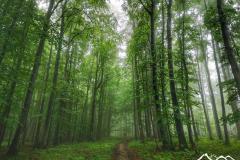 mgla-przed-jaworzyna-koniecznianska-2-scaled