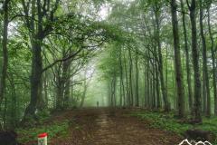 mgla-przed-jaworzyna-koniecznianska-scaled