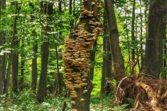 Szlak Karpacki: Beskid Niski