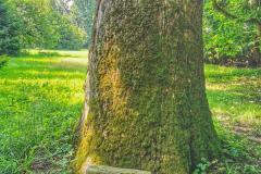 szlak-karpacki-krasiczyn-drzewo-scaled