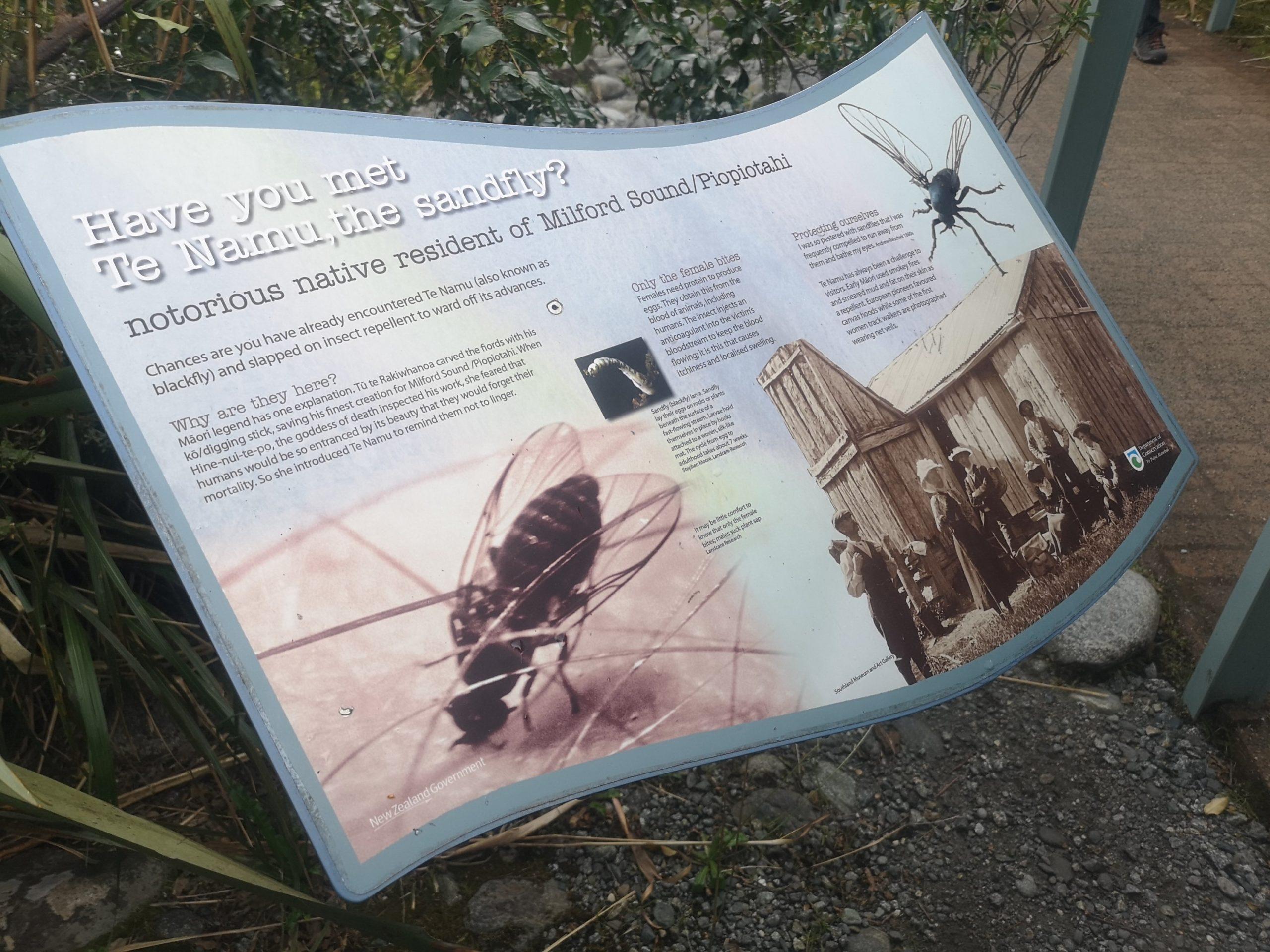 Czym zaskoczyła nas Nowa Zelandia? - miliony much