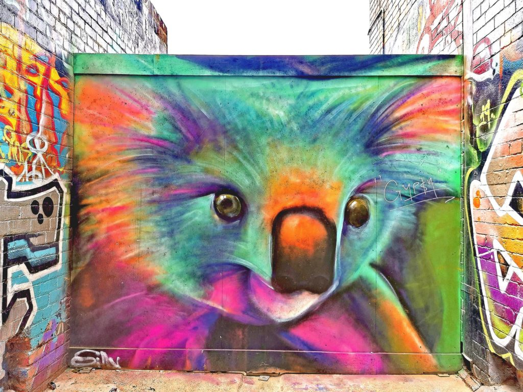 Zwierzęta Australii - koala