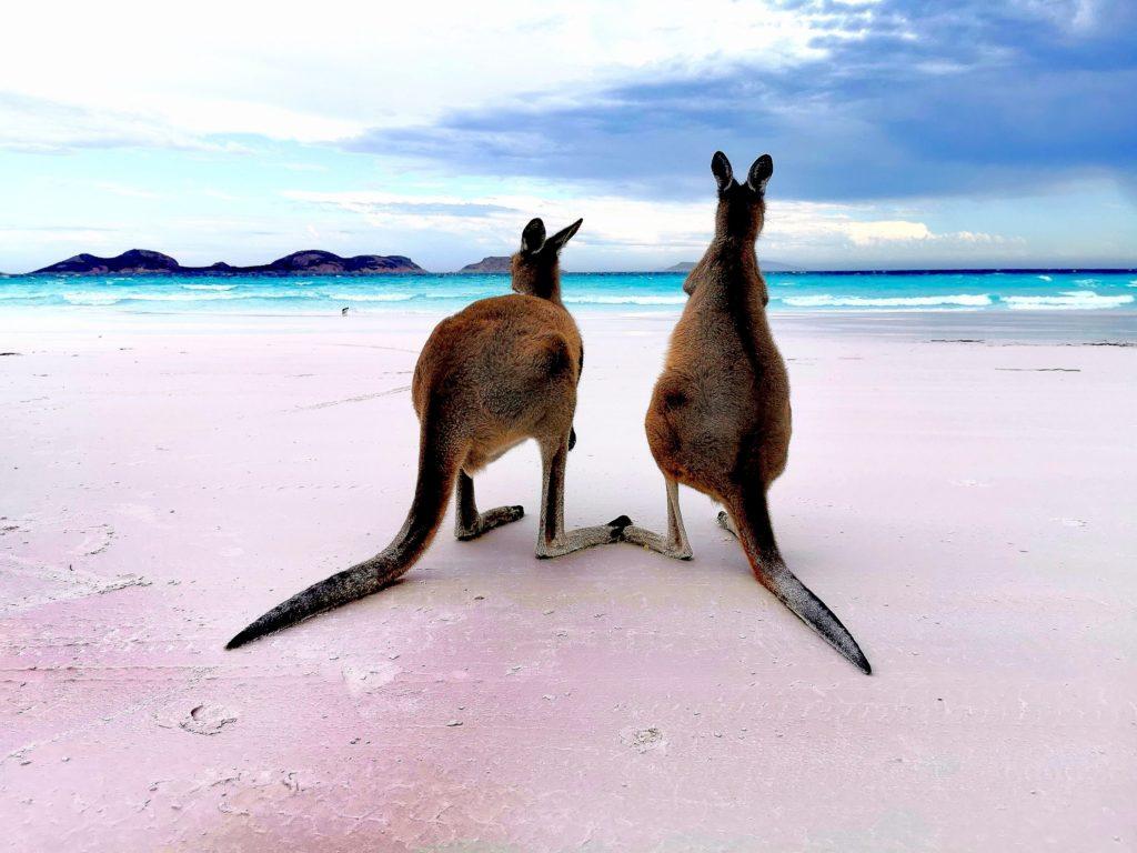kangury na Lucky Bay